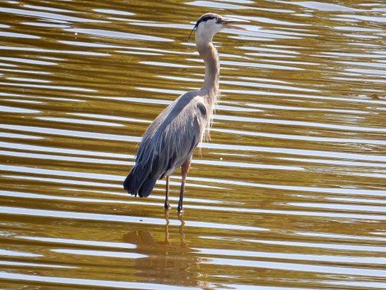 Семинол, Флорида: One of the local fishermen.