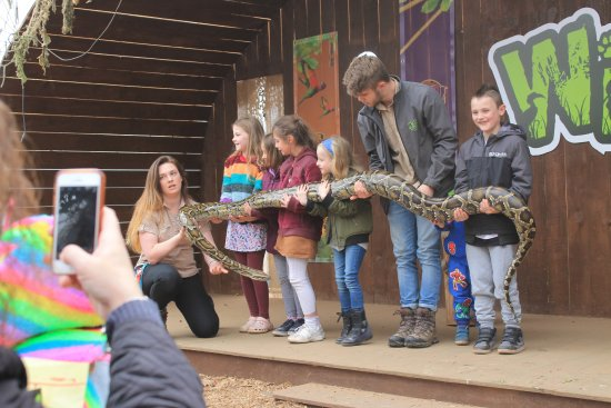 Wolverhampton, UK: Kids getting friendly with a big snake