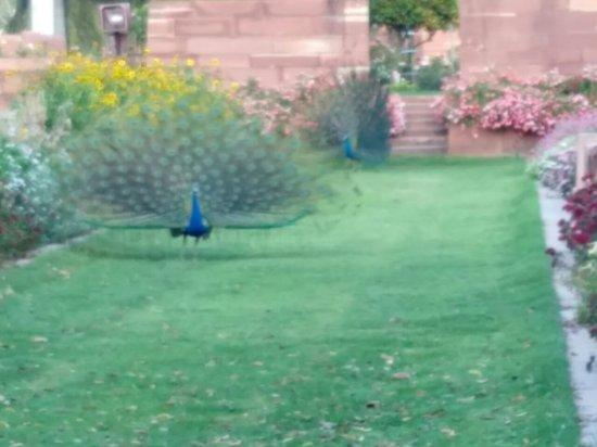Mughal garden billede af mughal garden new delhi Mughal garden booking