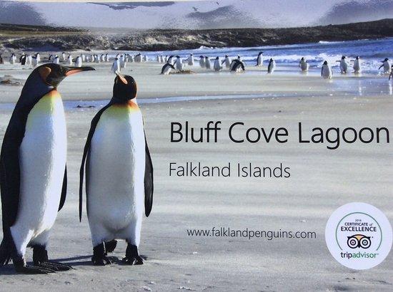 Bluff Cove Lagoon: Bluff Cove Brochure