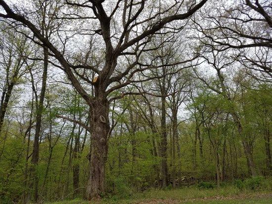 Mount Vernon, Айова: trees