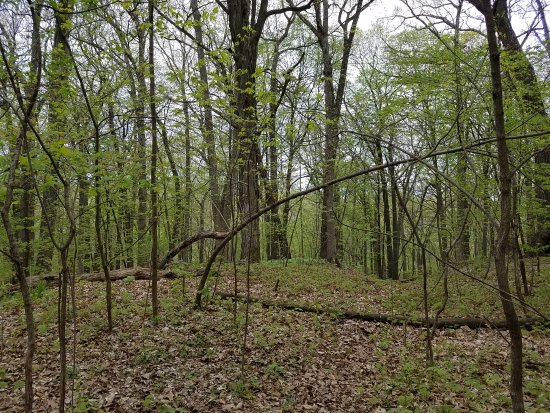 Mount Vernon, Айова: woods