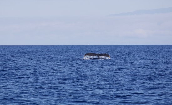 Ocean Sports Whale Watch Adventure : Lots of whales during our tour