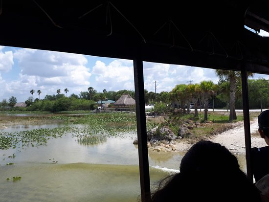 Clewiston, FL: Riding in the Swamp Buggy....