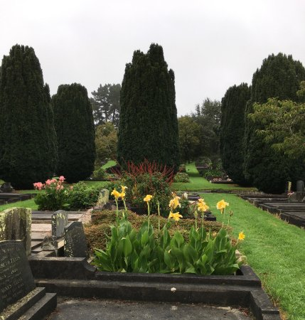 New Plymouth, Selandia Baru: March - cannas, salvia & yew trees
