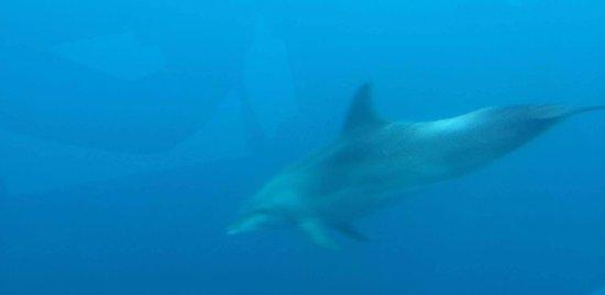 Murter, كرواتيا: Dolphin :D