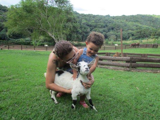 Itatiba, SP : No Minizoo é possível interagir com os animais de fazenda.