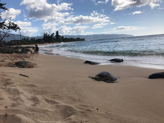 Turtle Bay Beach Kahuku 2020 All