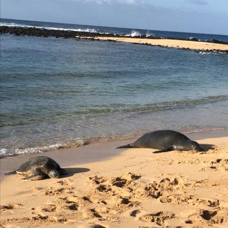 Koloa, Χαβάη: photo0.jpg