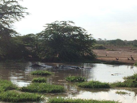 Voyager Ziwani, Tsavo West: photo0.jpg