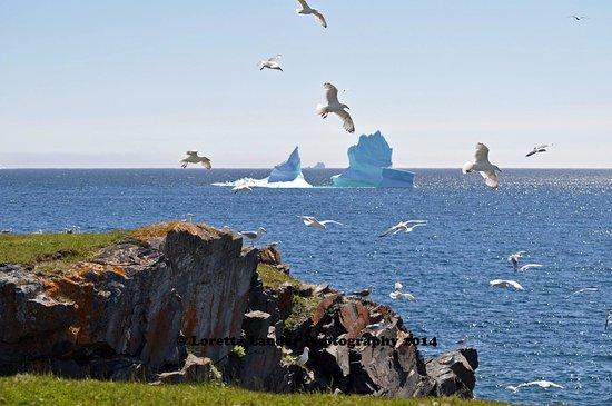 Iceberg in Bonavista Bay
