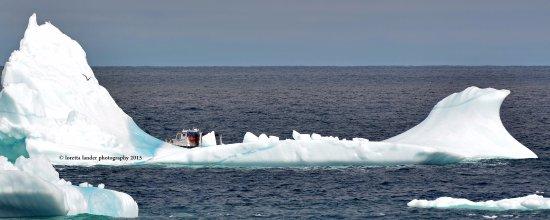 Iceberg off bonavista