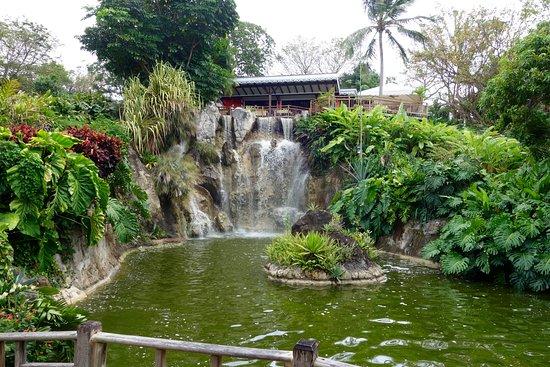 Deshaies, Gwadelupa: restaurant, above the waterfall