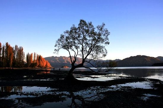 Sunrise at the Lone Tree at Wanaka