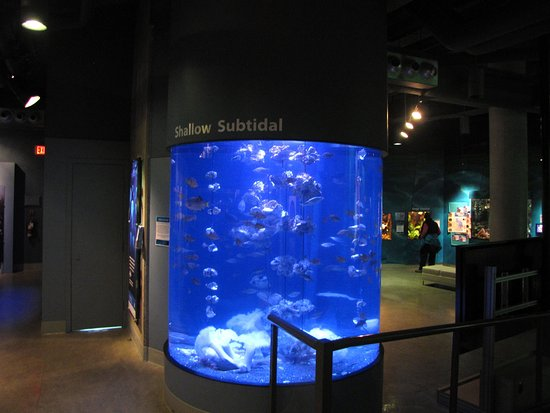 Sidney, Kanada: Large aquarium displaying near shore habitat with oysters and perch.