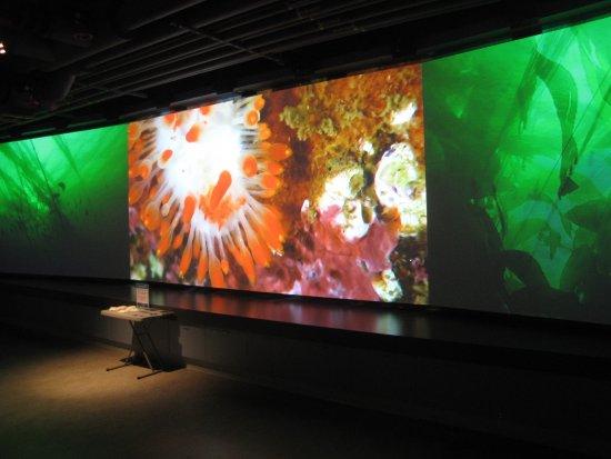 Sidney, Kanada: Screen showing three videos of underwater life.