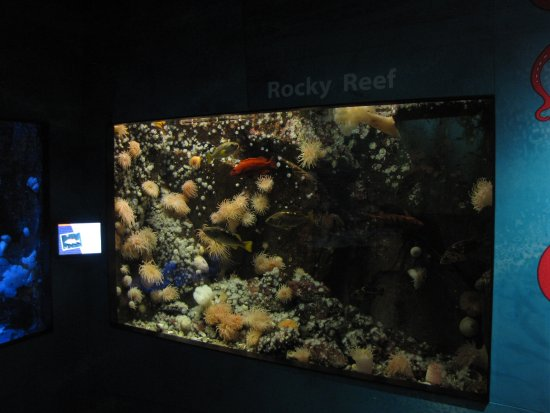Sidney, Kanada: A large aquarium replicating a rock reef.