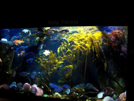 Sidney, Kanada: large aquarium replicating a kelp forest habitat.