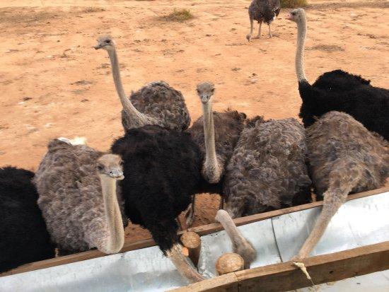 Oudtshoorn, South Africa: photo0.jpg