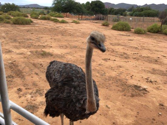Oudtshoorn, South Africa: photo2.jpg