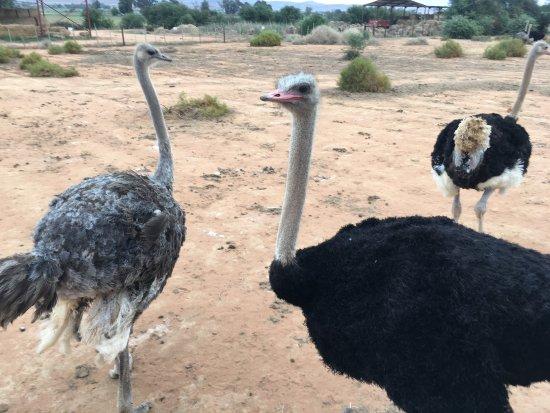 Oudtshoorn, South Africa: photo5.jpg