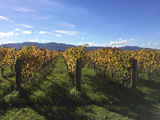 Marlborough Wine Tours: photo2.jpg