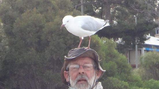 Kingscote, Australia: hoedje van.....