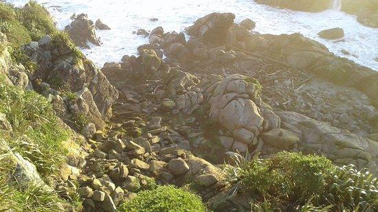 Westport, Nova Zelândia: Seals