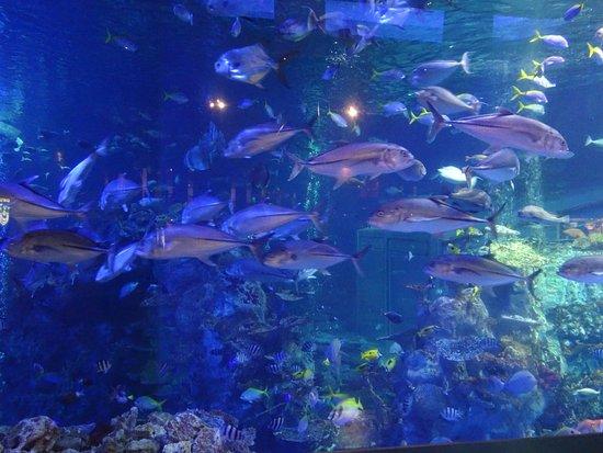鳥羽水族館 - Picture of Toba Aquarium, Toba - TripAdvisor