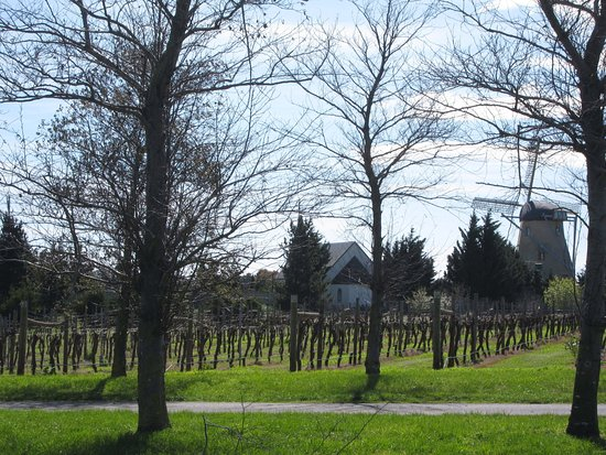Gisborne, Australia: Dormant Vines soon to flower - Macedon Ranges. We know the most beautiful spots.