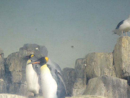 Central Park Zoo : Pinguins