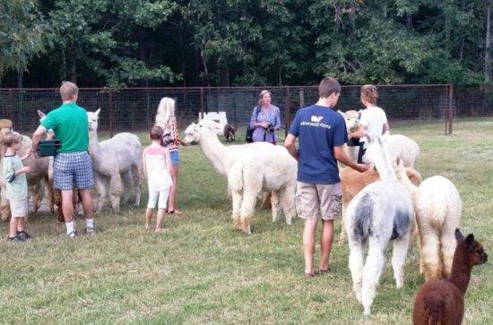 Alpaca Farm Tour in Adairsville...