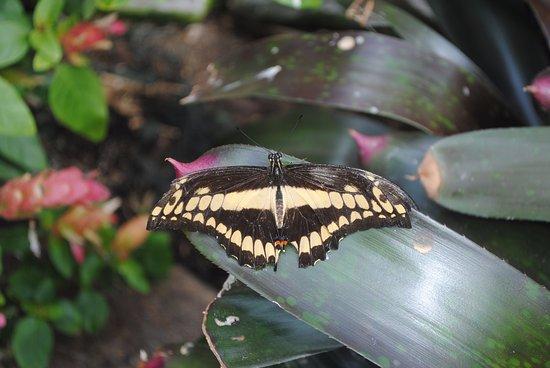 Ames, IA: Butterfly garden