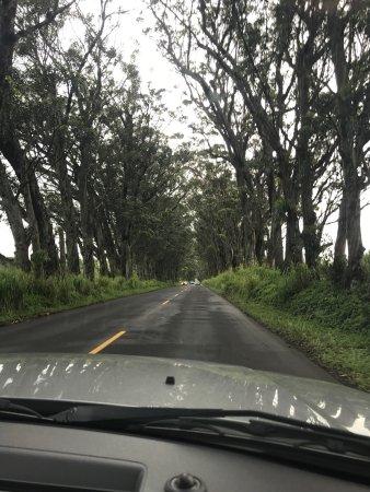 Kalaheo, ฮาวาย: photo0.jpg