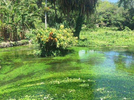 Petersfield, Jamajka: photo2.jpg