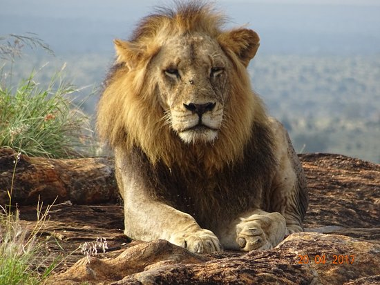 Biaprocade Day Tours & Safaris: The king!