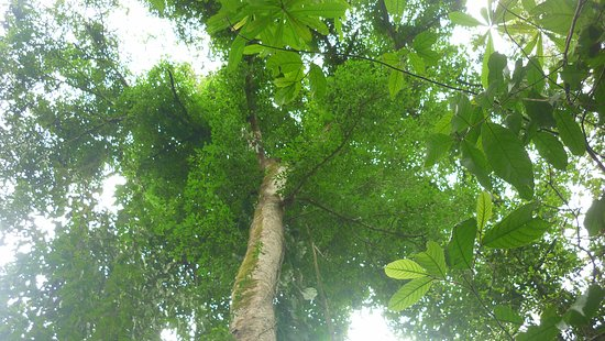 Tarcoles, Costa Rica: Bosque
