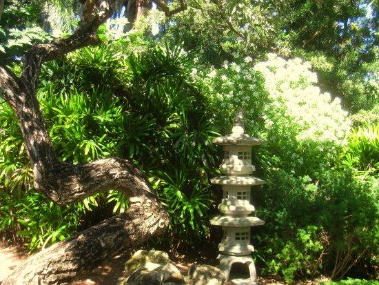 Miami Beach Botanical Garden: сад