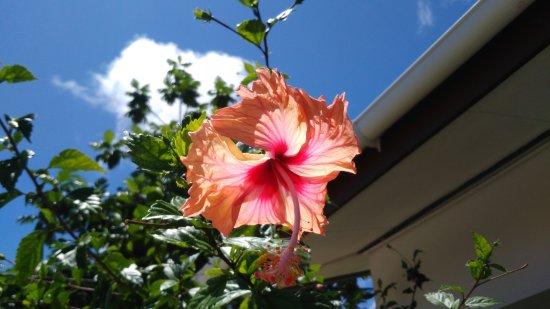 Pension Hibiscus Photo