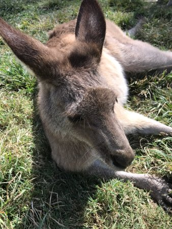 Currumbin, Australië: photo1.jpg