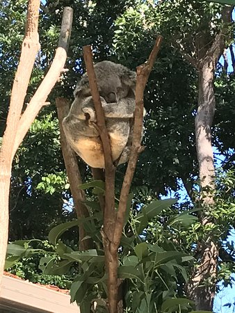 Currumbin, Australia: photo2.jpg