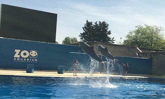 Zoo Aquarium de Madrid : Delfines