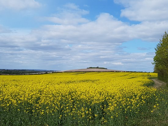 Aston Rowant, UK: Fields of rape in spring