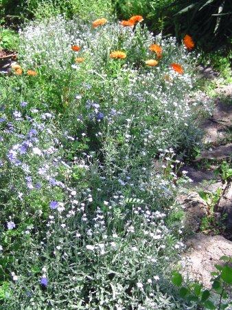 Figeac, Francia: Au Jardin sur le Toit