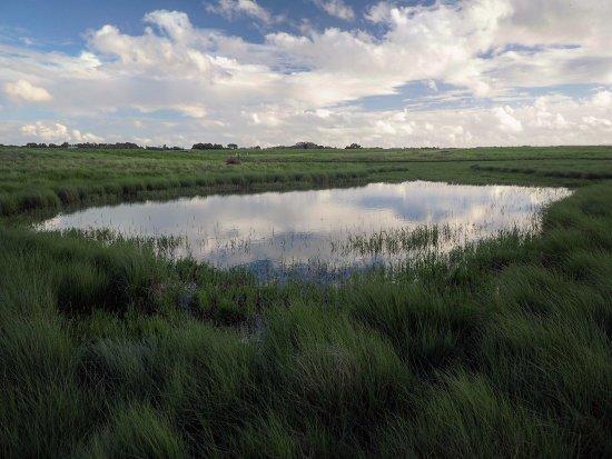 Manukau, New Zealand: interesting reflection on the pond