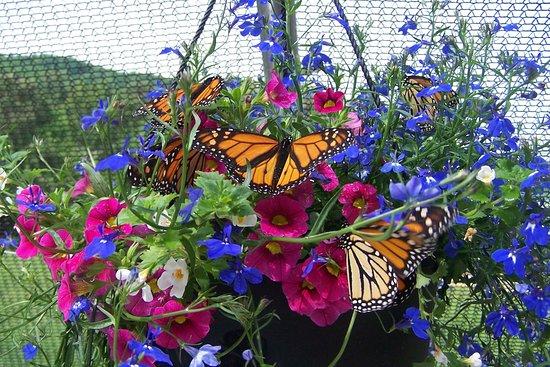 "Wytheville, فيرجينيا: ""Flying Flowers"" at Beagle Ridge Herb Farm."