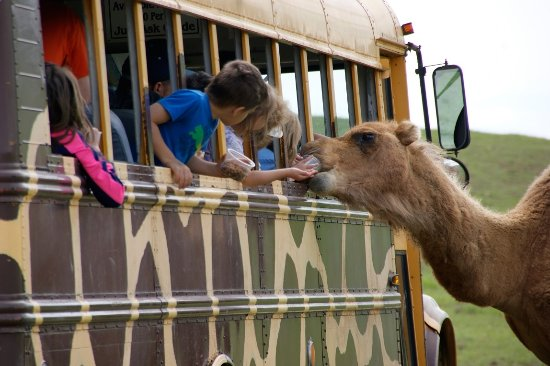 Wytheville, VA: Feed and interact with animals from 6 continents at Fort Chiswell Animal Park!