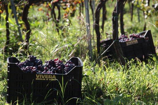 Linguaglossa, Italia: 100% Vivera Biologico, Organic