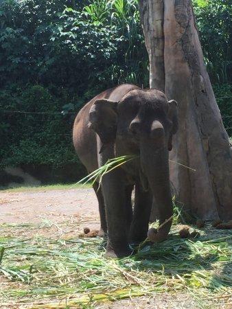 Bali Safari & Marine Park: photo2.jpg