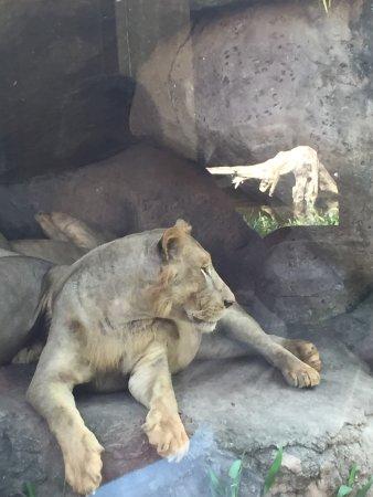 Bali Safari & Marine Park: photo3.jpg